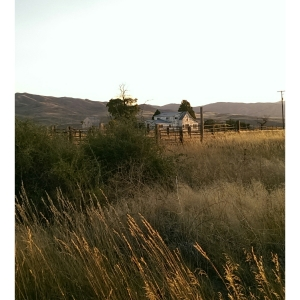 Idaho Homestead